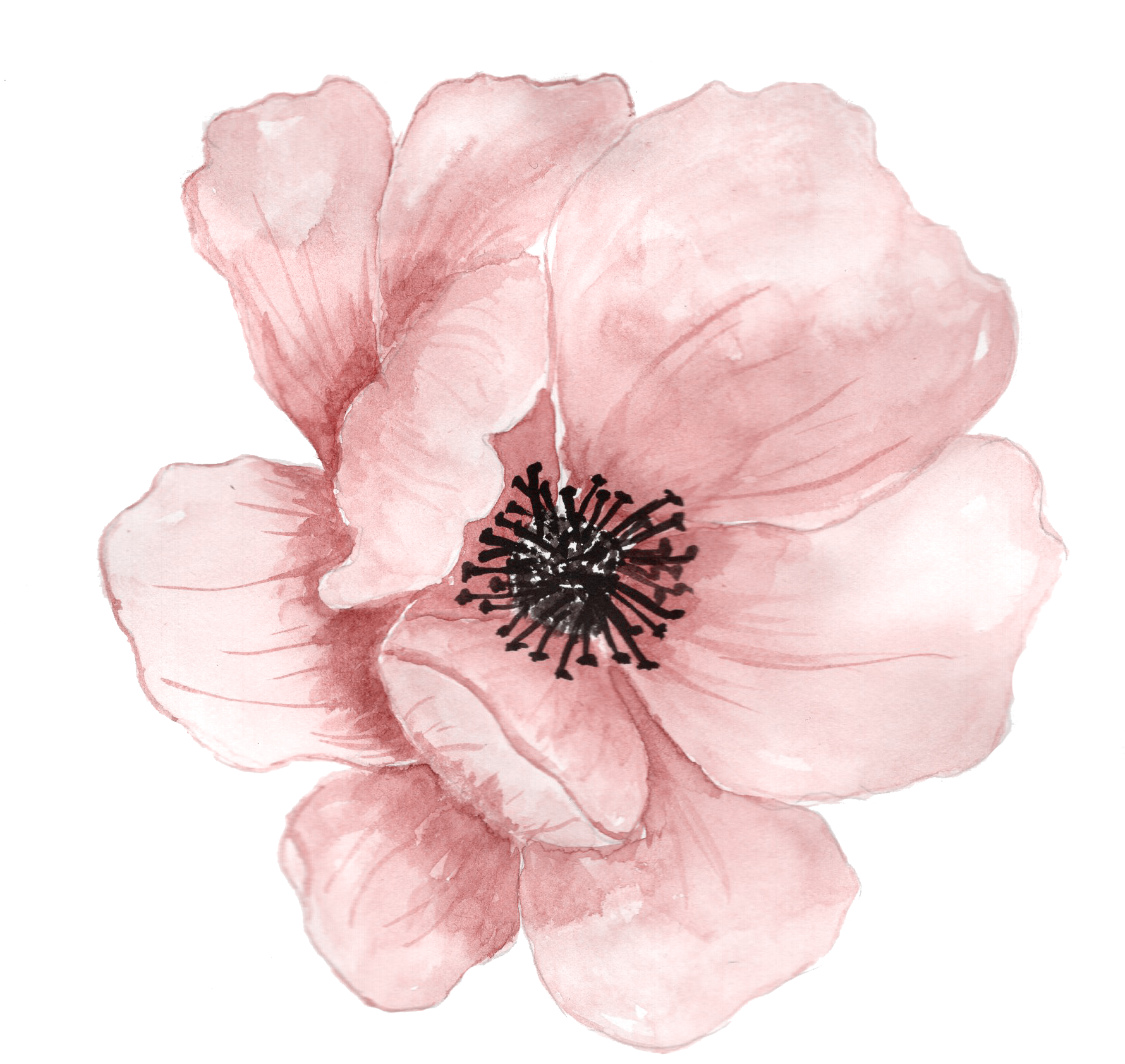 Watercolor Flowers Png Vector Psd And Clipart With: Pin By Karen Combs On Things To Paint In 2019