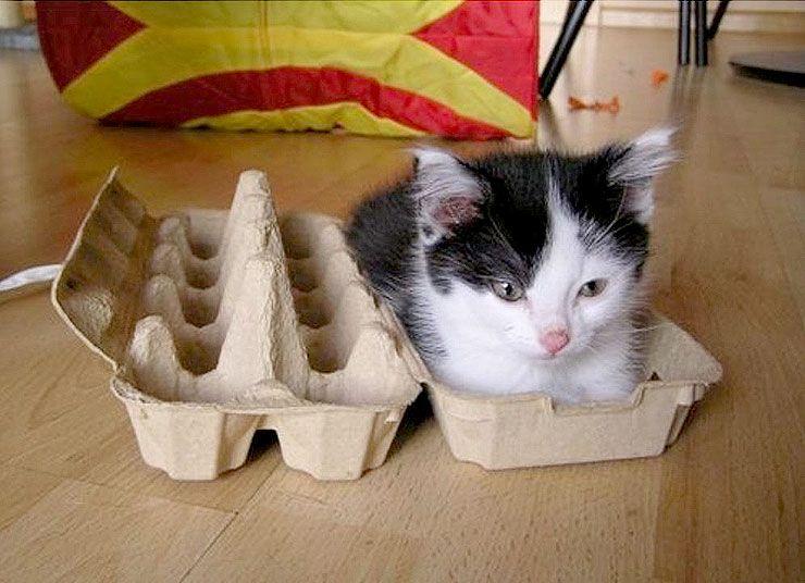 Catty10