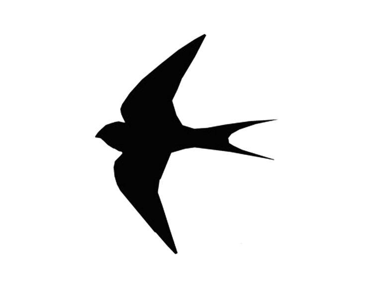Wandgestaltung Mit Vogel Motiven In 2020 Fliegender Vogel Silhouette Schablonen Wandschablonen