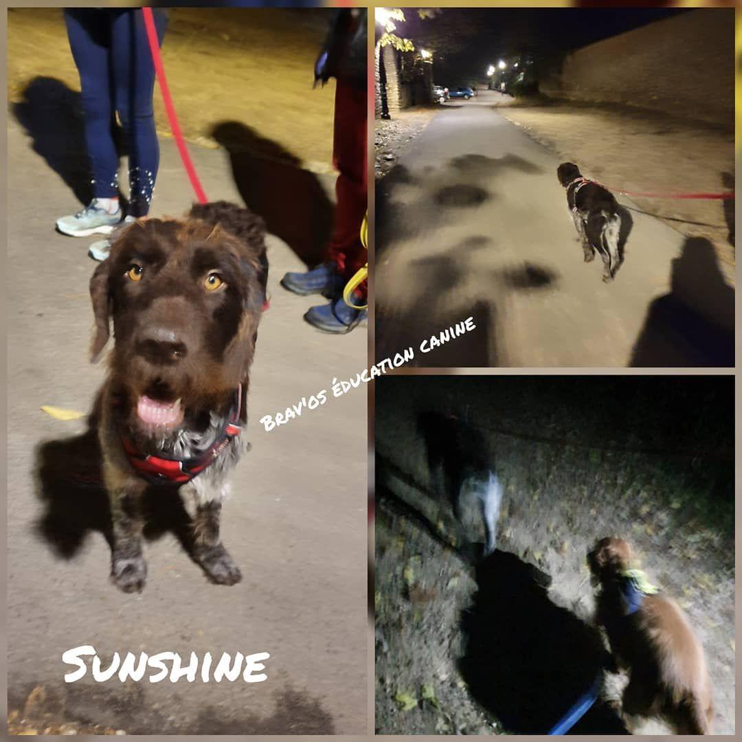 Encore Une Belle Seance Avec Sunshine Griffon Korthal D 1 An Sunshine Porte Tres Bien Son Nom C Est Un Rayon Soleil Ce Chien Il Vie Canine Dogs Animals