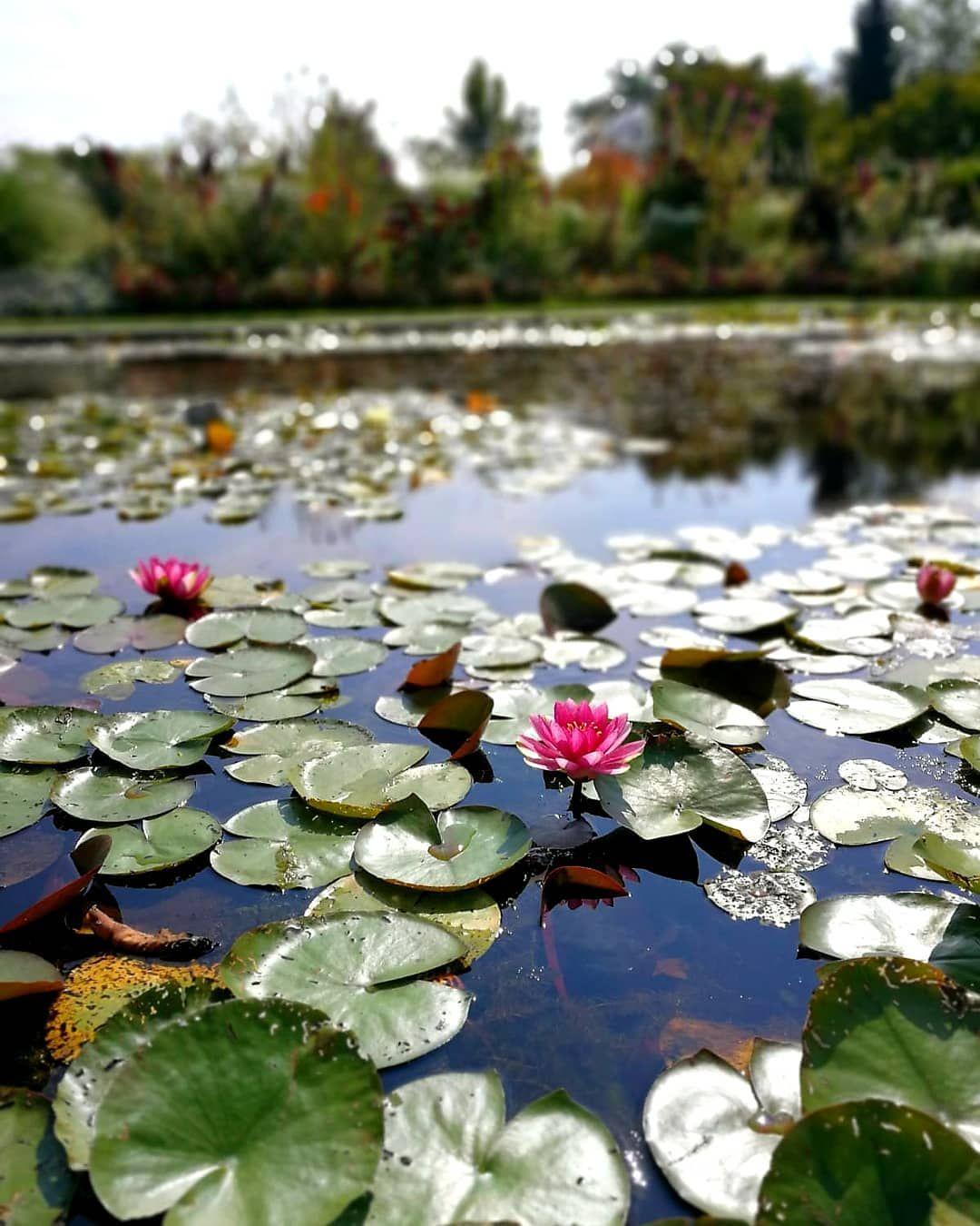 Botanischer Garten Munchen Nymphenburg Der Botanische Garten Besitzt Uber 14 000 Pflanzenarten Aus Der Ganzen Welt In 2020 Instagram Outdoor Decor Outdoor