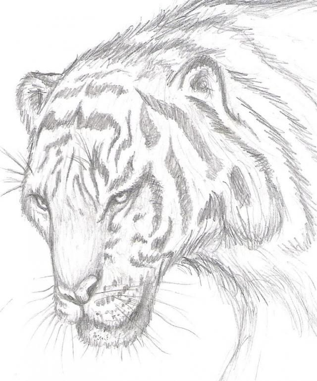 Dibujos Lapiz De Color Animales Buscar Con Google Dibujos A