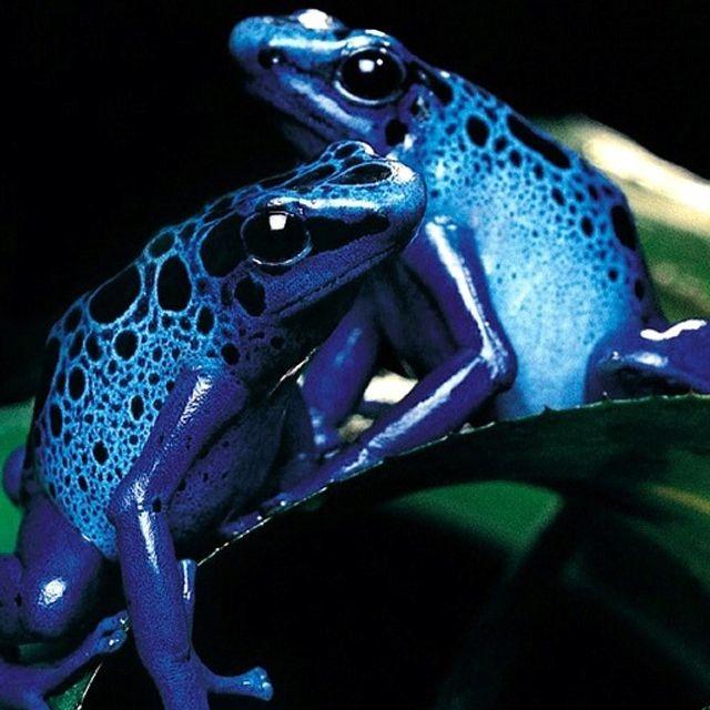 меня, картинки голубых лягушек это относится мебели
