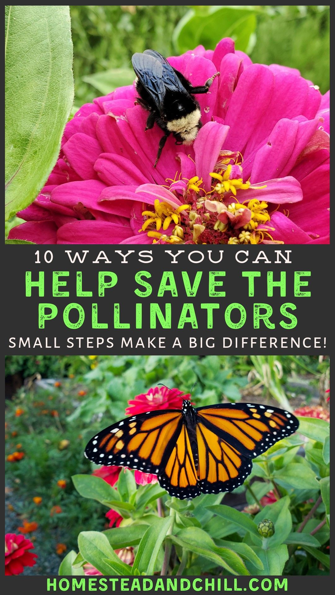 10 Ways To Help Pollinators Save Bees Butterflies Beyond Homestead And Chill In 2020 Pollination Wildlife Nature Wildlife Habitat