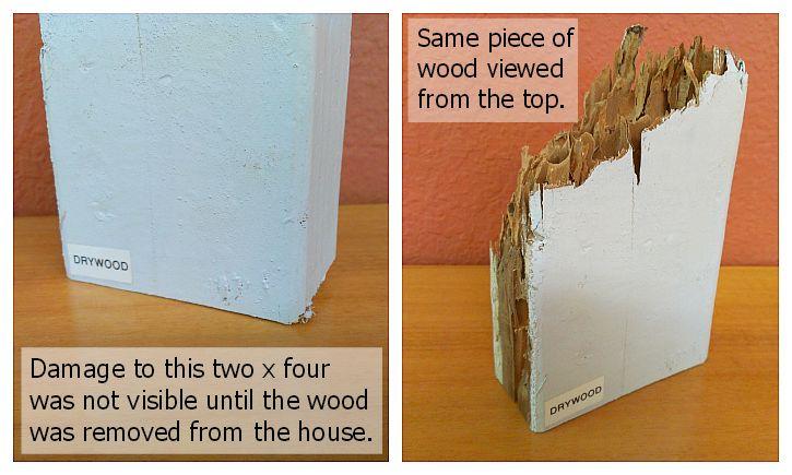 5 Essentials Of Townhouse Fumigation Termite Pest Control Termites Termite Damage