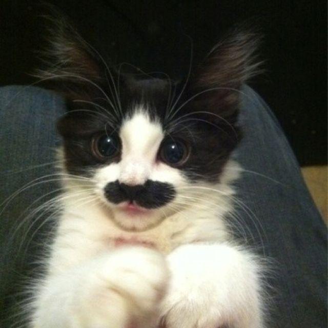 Movember Kitty