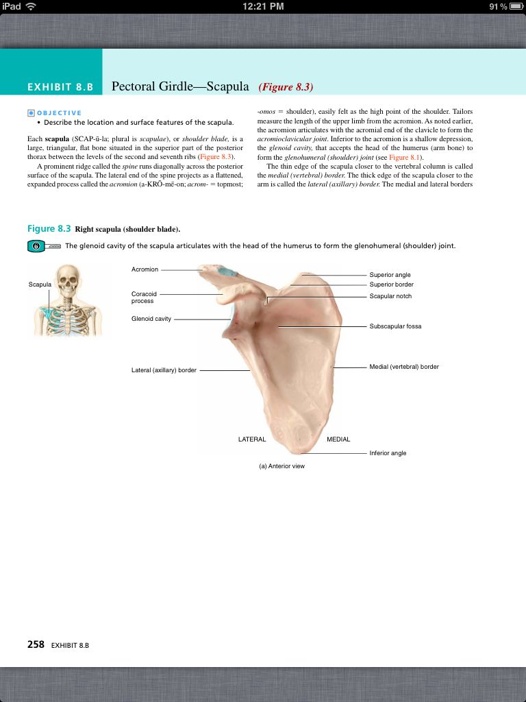 Principles Of Anatomy And Physiology Chapter 8 The Skeletal System Appendicular Skeleton 4 Book Pg 258
