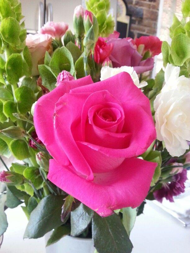 Rosas ..