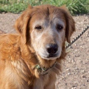 This Is Caleb 10 Yrs He Was An Owner Surrender He Lived On A