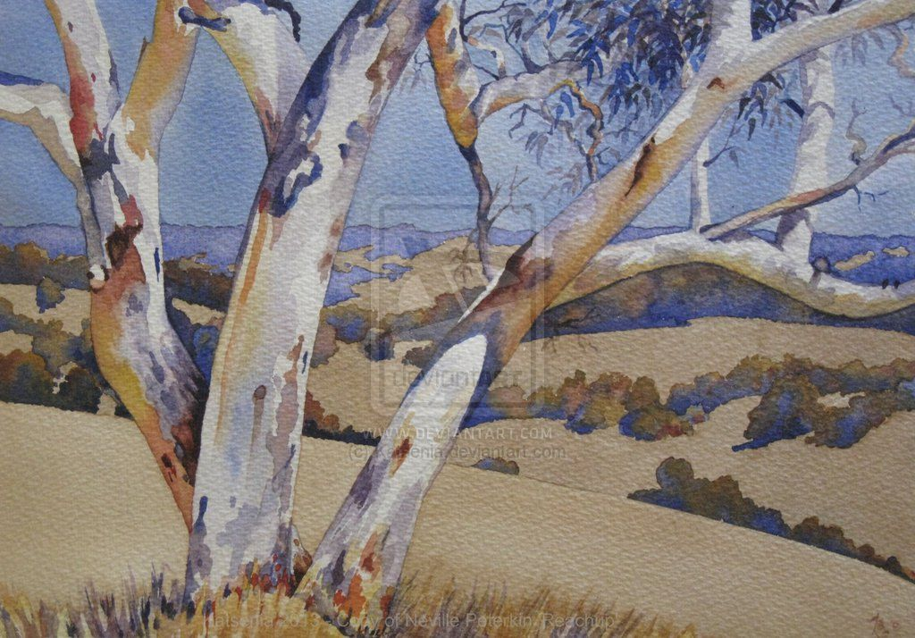 Watercolour Of Australian Ghost Gum Tree By Katsenia On Deviantart