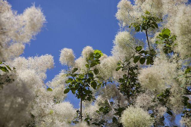 Botanische Tuinen Utrecht