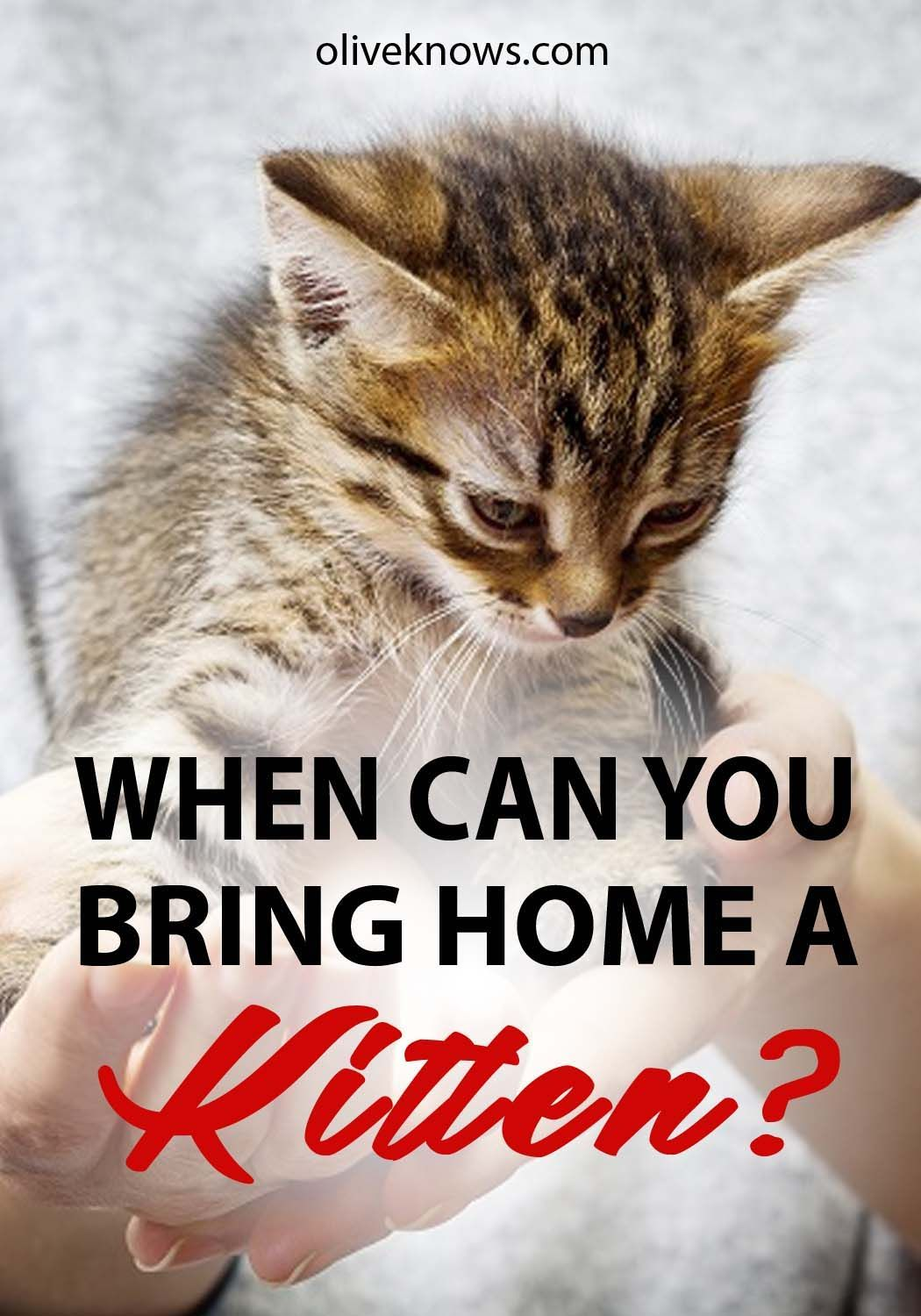 When Can You Bring Home A Kitten Oliveknows Cat Care Tips Pet Insurance For Dogs Cats