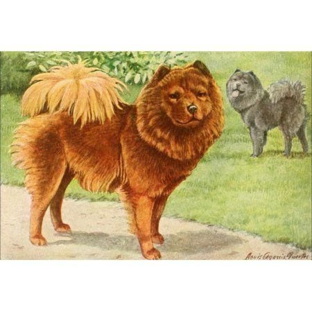 Home Antique Dog Prints Chow Dog Breed Dog Signs