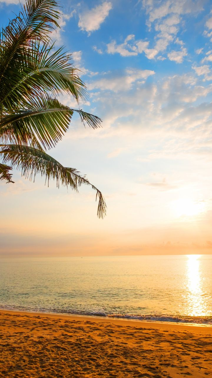 Palm Tree Sand Beach Sunny Day Holiday 720x1280
