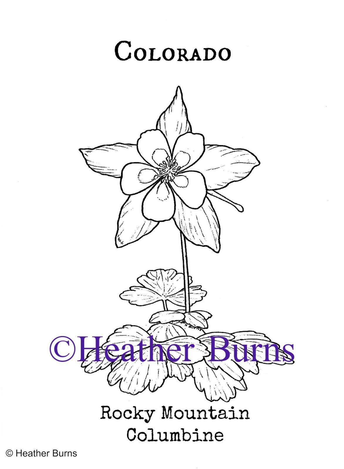 Colorado State Flower: Rocky Mountain Columbine | Pinterest | Flower