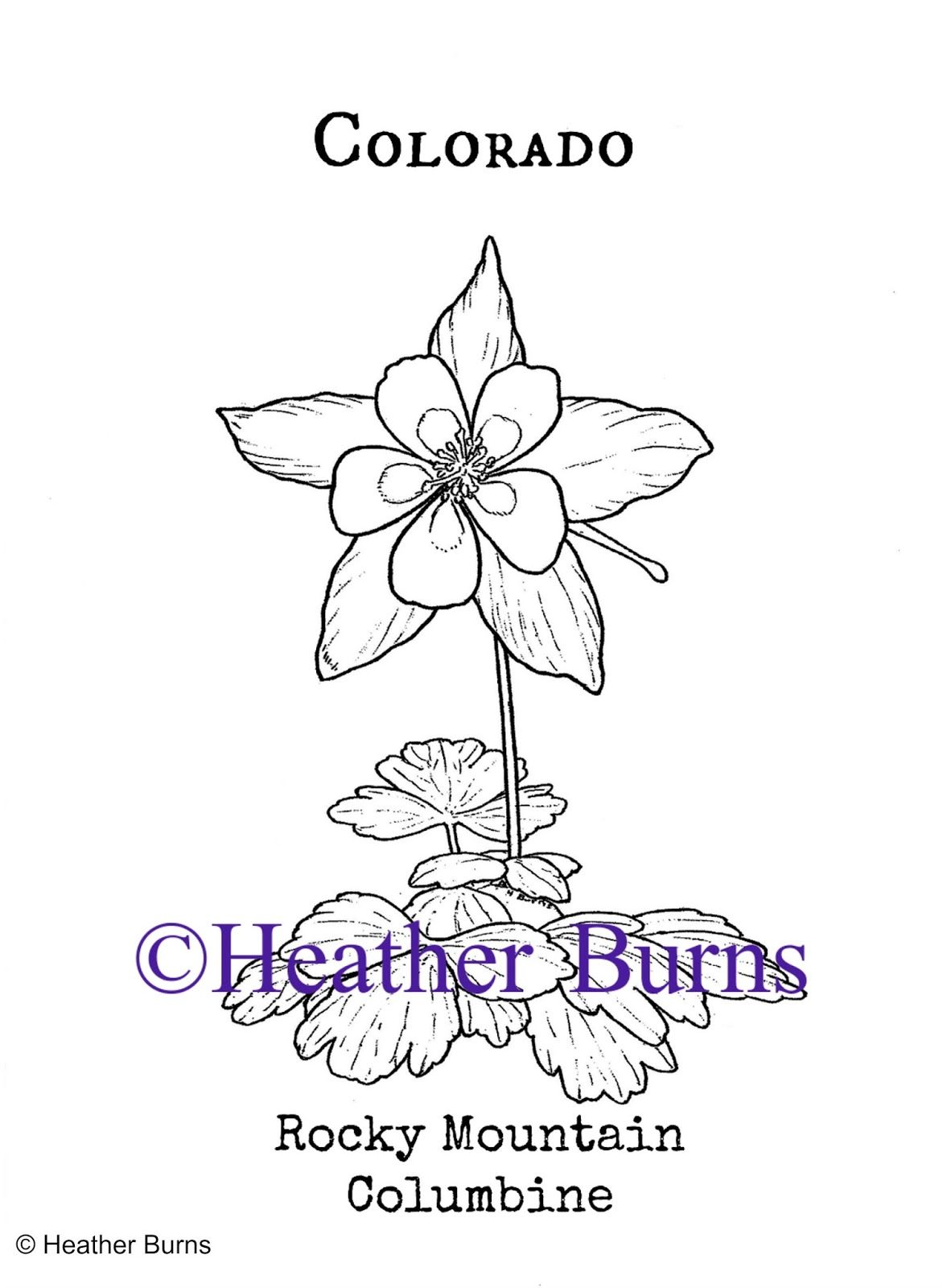 Pin On State Flower Coloring Book