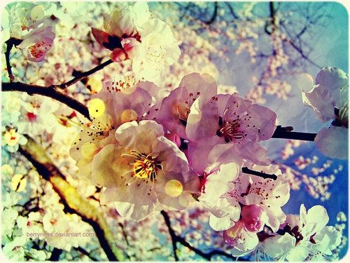 Japanese Cherry Blossom S Have To Be One Of My Fav S Blossom Trees Flowers Art