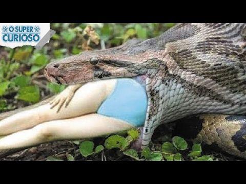 As 5 Maiores Cobras Do Mundo Youtube Maior Cobra Do Mundo