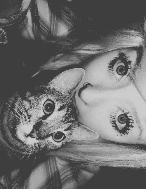 Resultado de imagen para gatos tumblr fotos