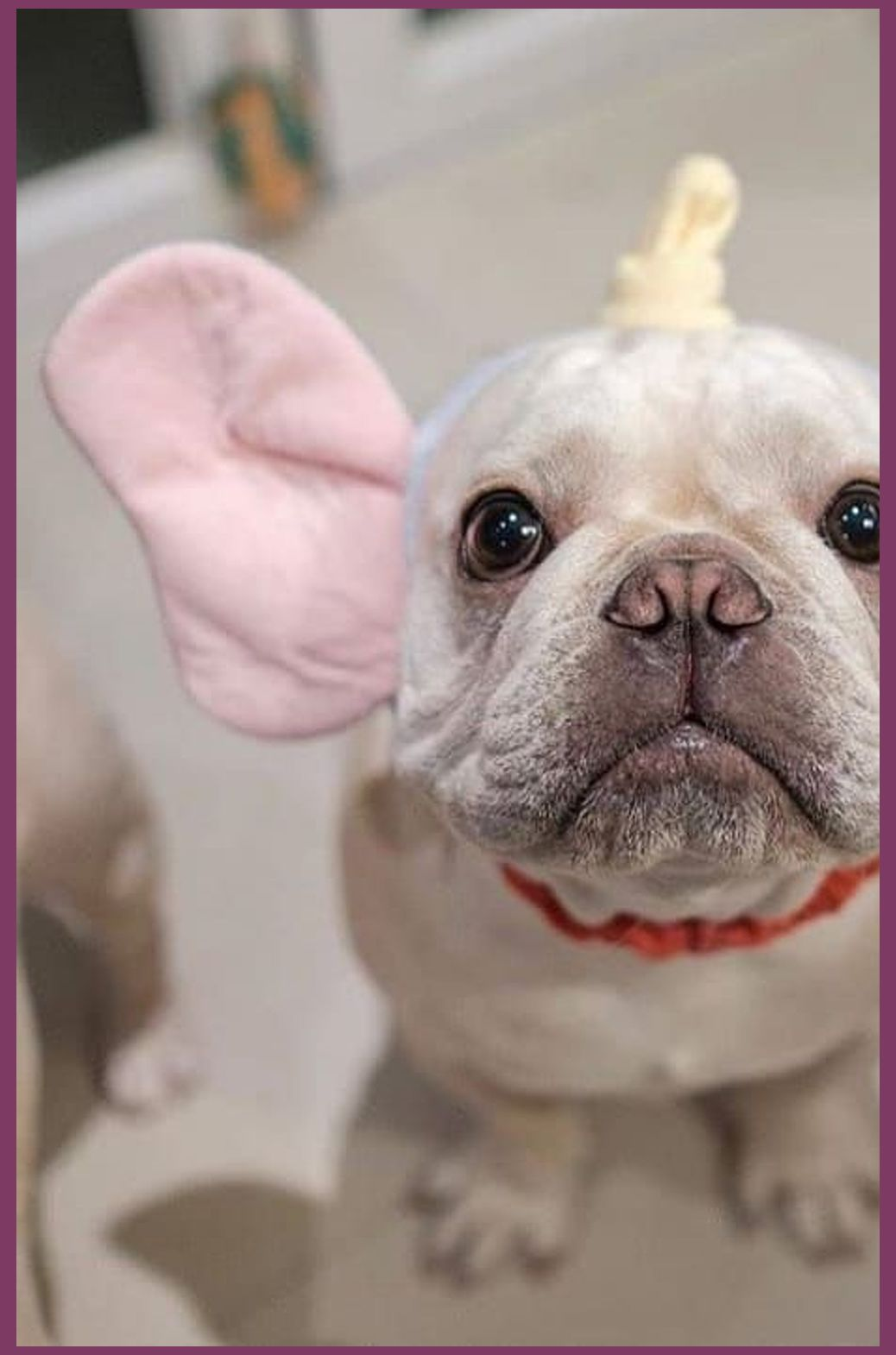 See More Ideas About French Bulldog Bulldog Puppies And French