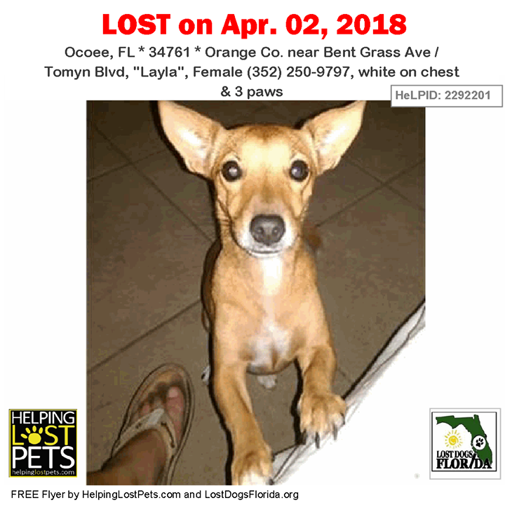 Have You Seen This Lost Dog Lostdog Layla Ocoee Bent Grass