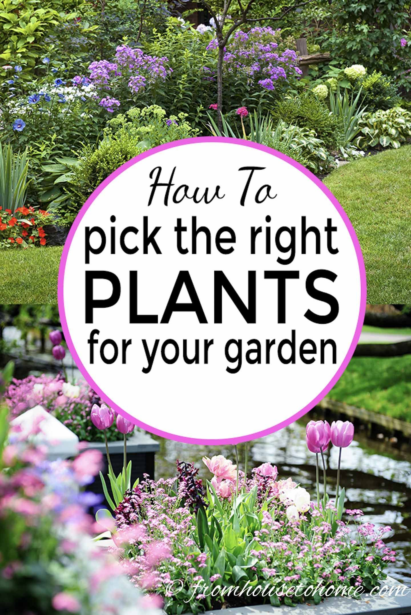 How To Choose Plants For Landscaping Your Garden Landscaping Plants Part Shade Plants Low Maintenance Garden