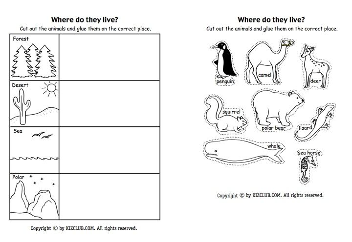 Here S A Page For Students To Sort Animals According To Where They Live Life Science Animal Habitats Kindergarten Kindergarten Science Animal habitat worksheets for kindergarten