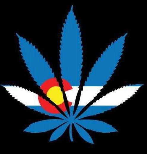 Colorado Legalizes Marijuana Weed Legal Cannabis Denver