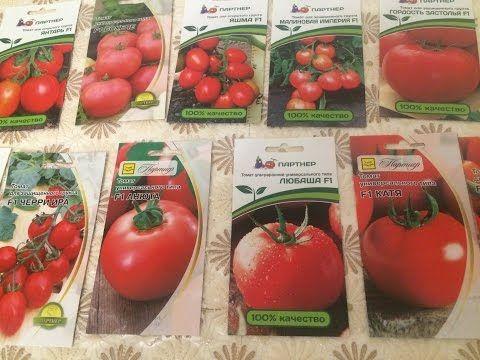Как правильно собрать и сохранить семена помидоров 27