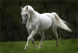 Resultado de imagen de caballos salvajes