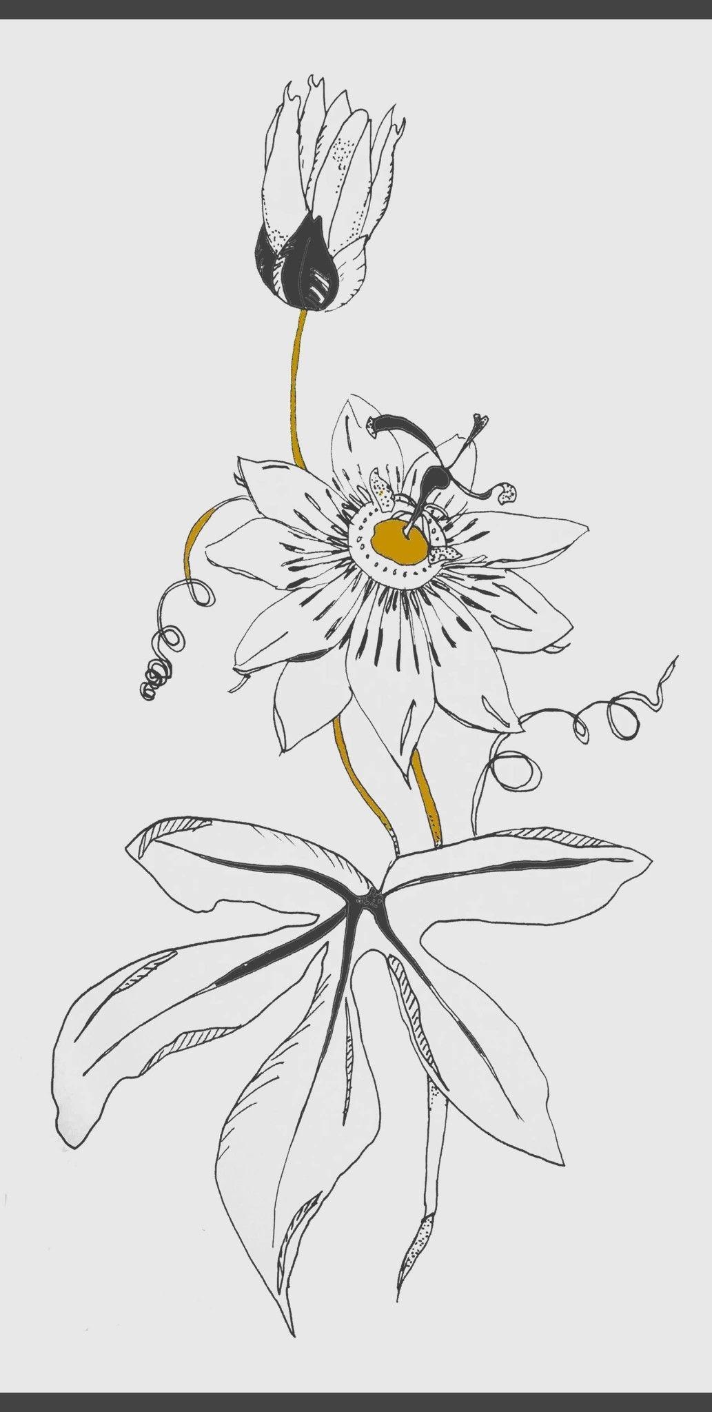 Passion Flower Passion Fruit Flower Doodle Images Flower Sketches