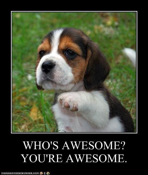 Who S Awesome You Re Awesome Beagle Puppy Puppies Cute Beagles