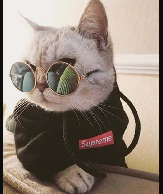 Top 25 Cats in Glasses CLC 23 in 2020 | Kittens cutest