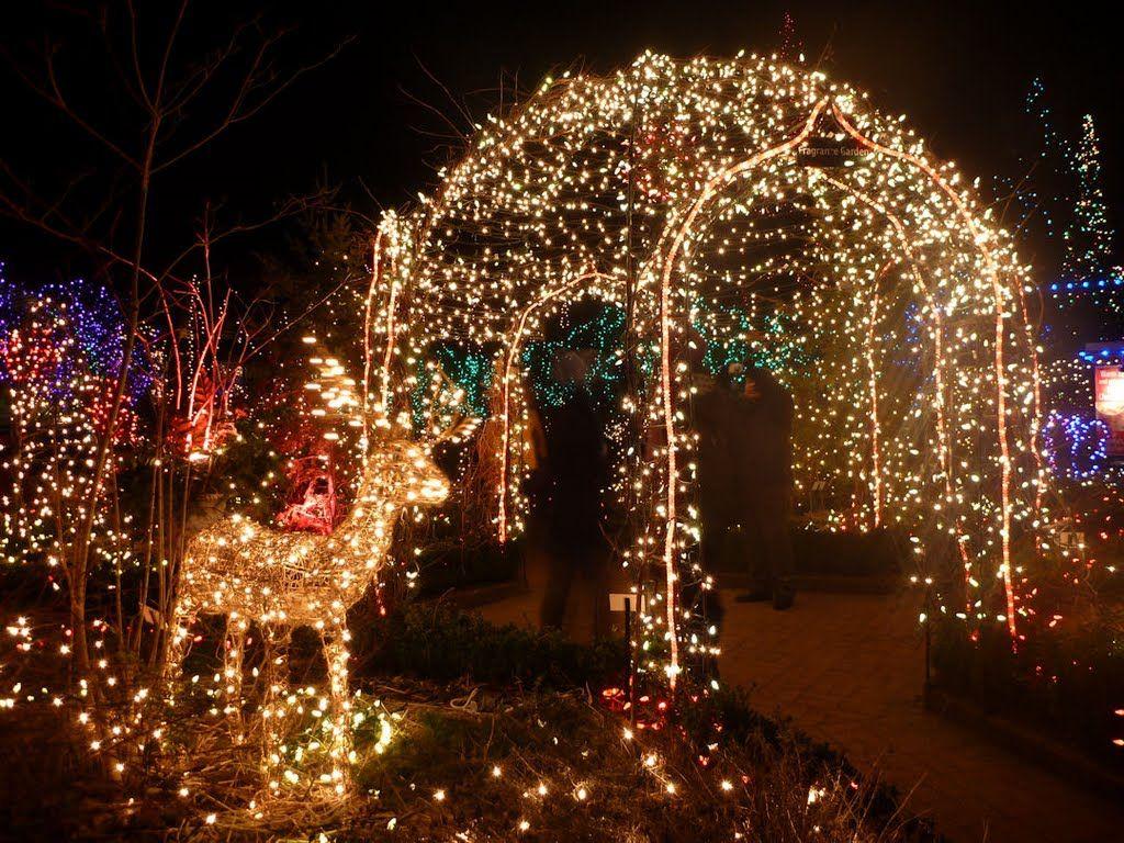 037effd7bdae83bead70825be92c71c5 - Van Dusen Botanical Gardens Christmas Lights