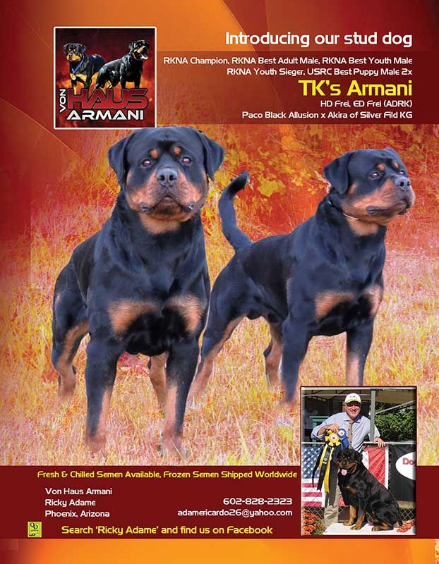 Introducing Tk S Armani Von Haus Armani Ricky Adame Phoenix