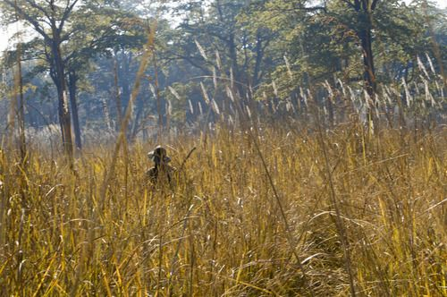 Tracking the elusive Bengal tiger by foot in the remote Bardia jungle  #himalayanjourney #nepal #wanderlust #bengaltiger