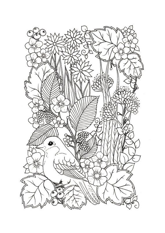 Hand Drawn Digital Coloring Page Drawn By Me Print As Many As You Want A4 Format Pdf File 300dpi Prin Coloring Pages Bird Coloring Pages Blank Coloring Pages
