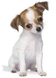 Mexican Dog Names Perfect For Your Male Or Female Puppy Dog