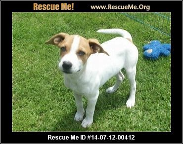 Ohio Dog Rescue Adoptions Rescueme Org Rescue Dogs Dogs Post Animal