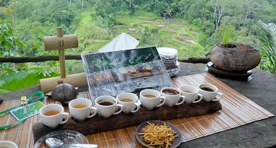 Bali Pulina Agro Tourism Coffe Plantation 10 Tempat Wisata