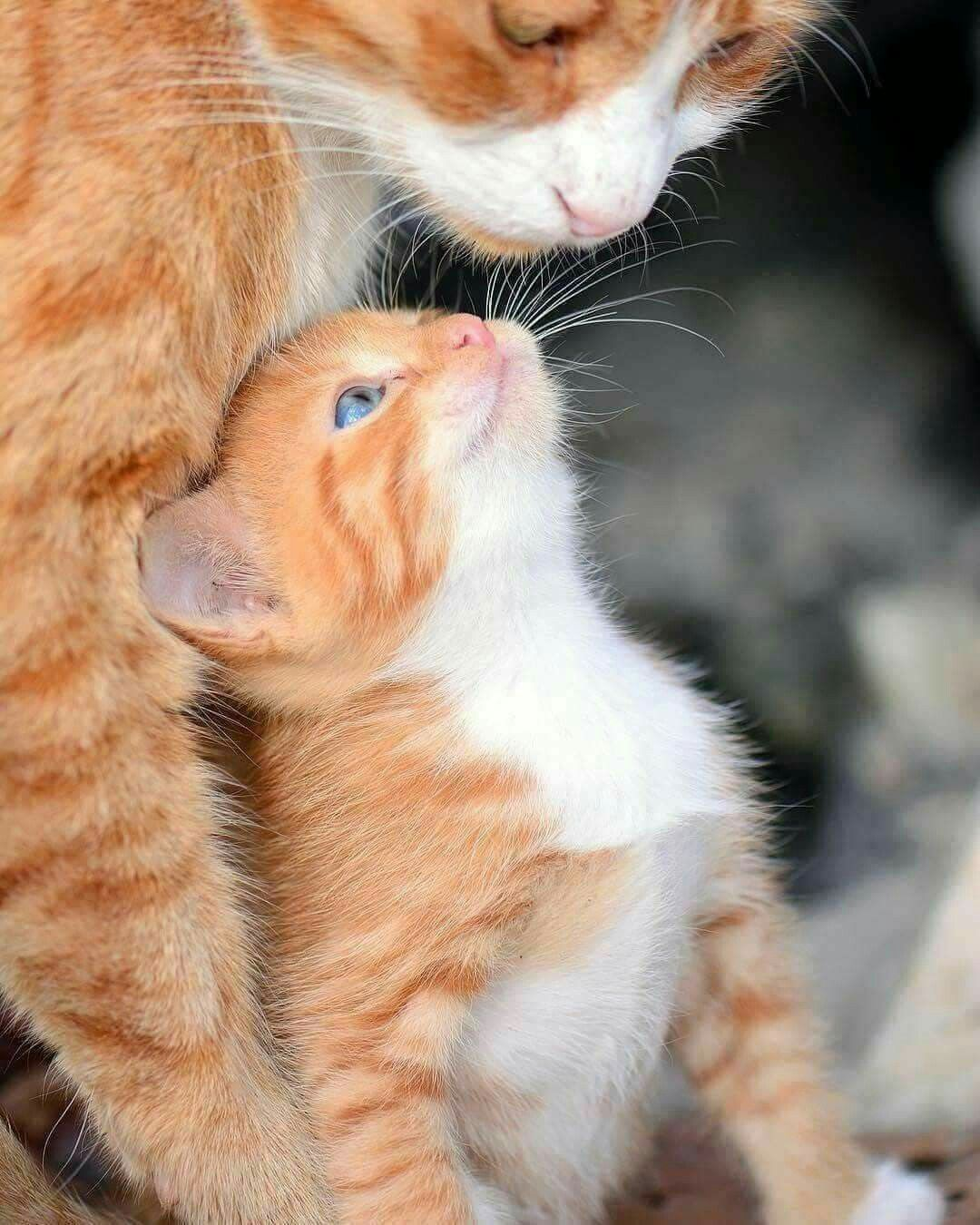 I Wish All Kitty Families Could Stay Together Kittens Cutest