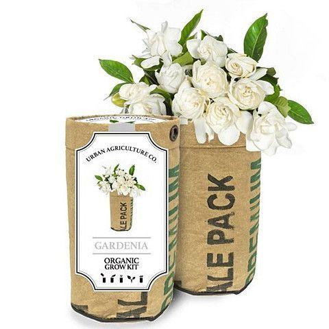 Organic Grow Kit: Gardenia