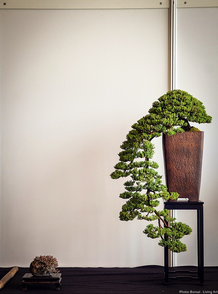 Photos from the VI. International bonsai exhibition in