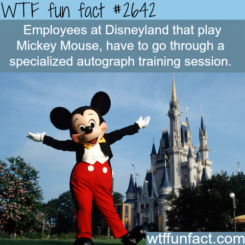 Employees at Disneyland - WTF fun facts | facts ...