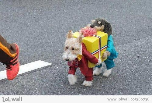 Best Dog Outfit Ever On Lol Wall By Florencia Straijer Funny
