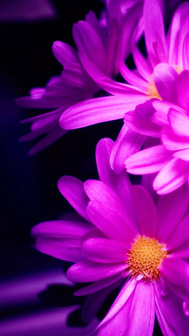50 Most Demanding Retina Ready Iphone 5 Wallpapers Hd Backgrounds Flower Iphone Wallpaper Pink Wallpaper Iphone Flower Wallpaper