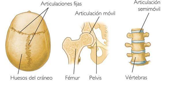 Articulaciones – Que son, estructura, clasificación, dolor, ejemplos ...