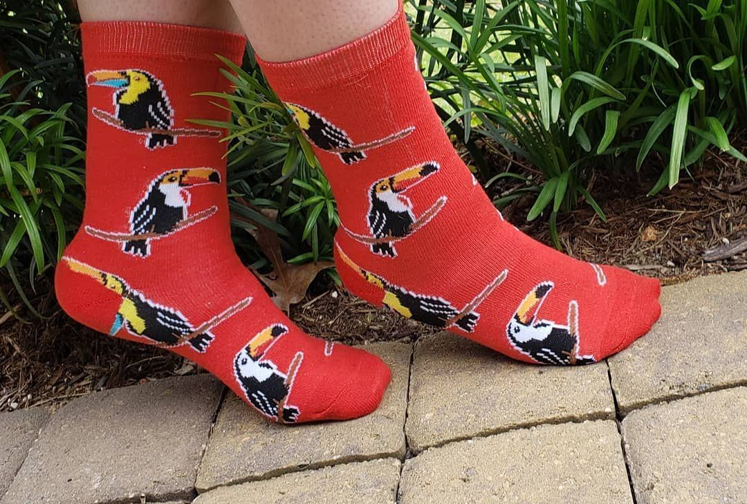 Toucki Toucans! #socks #socklife #socksgalore #sockalicious #sockaholic #sockcollector #sockcollection #socksofinstagram #socksoftheday #agirlandhersocks #funsocks #cutesocks #sockadventures #foozysocks #foozy #birdsocks #birds #toucansocks #toucans #red #redsocks #anklesocks #girlsocks Cute socks | Cool socks | Sock shoes | Crazy socks | My socks | Happy socks | Winter | Girl | High | Leggings | Funny | Fuzzy | Pattern | Forever 21 | Crew | Ideas | Fall Outfits | Korean | Urban Outfitters | Kaw