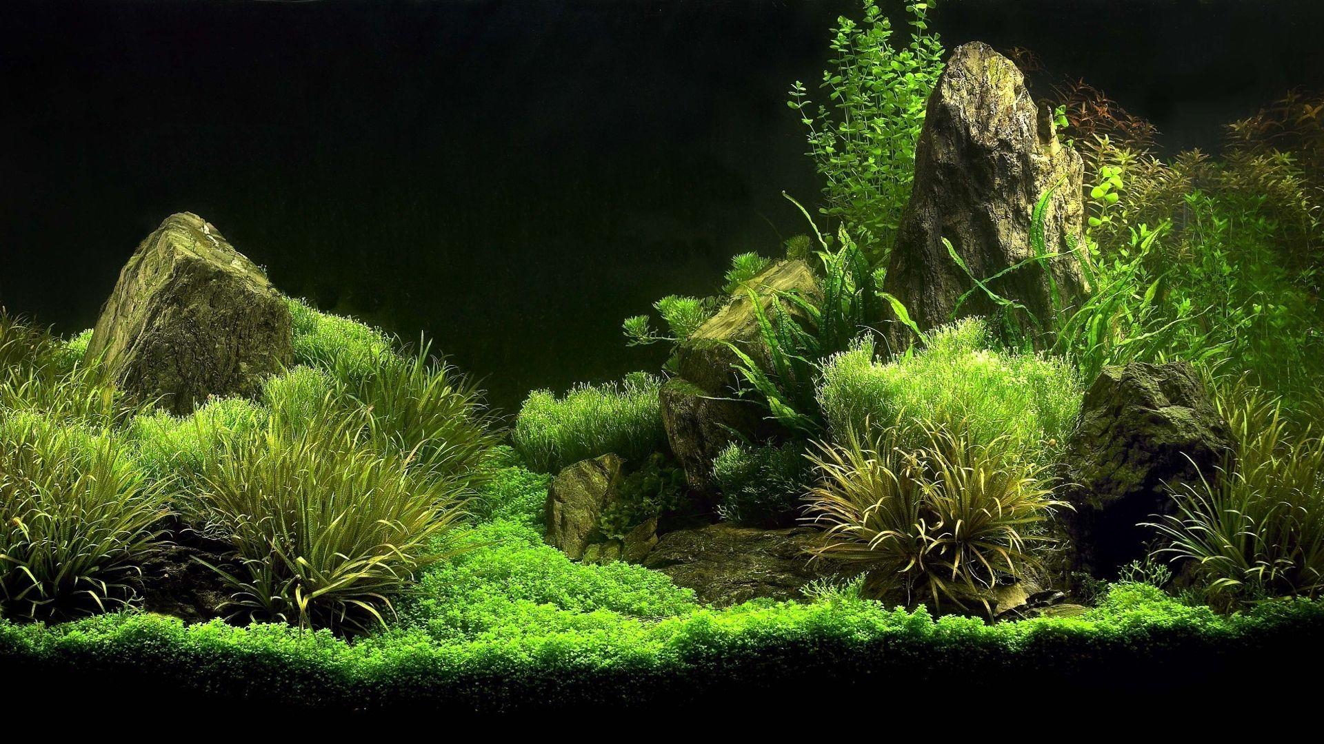 Freshwater Aquarium Design Ideas Fishy Okeanos Aquascaping .