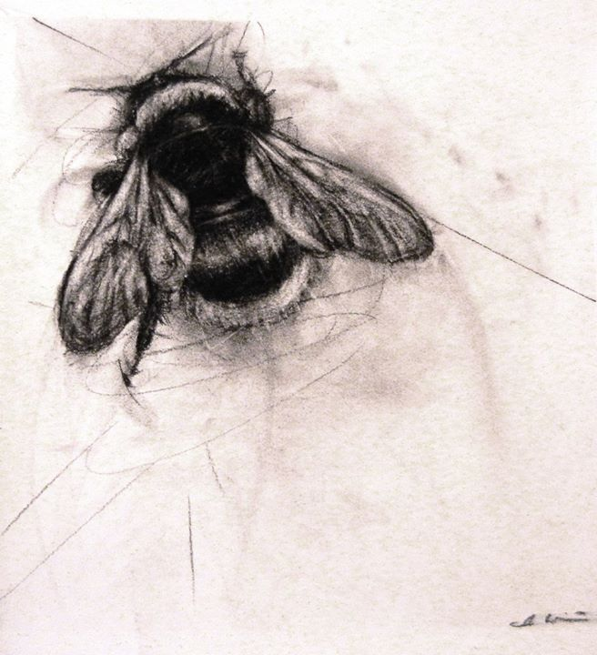 'Bumble Bee' - April Coppini   Charcoal Drawings ...